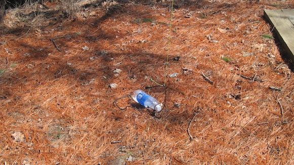 Here's my water bottle in the soft pine needles under the giant tree. It was a perfect throw over the branch 30 feet above me if I don't say so myself! Photo credit: Tim Carter, W3ATB