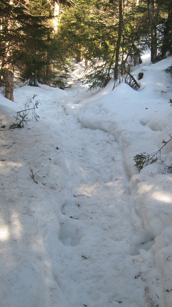 This is what the narrow trail looked like just down from the summit of Mt. Morgan. Stray from this and your foot's going for a ride. Photo credit: Tim Carter, W3ATB