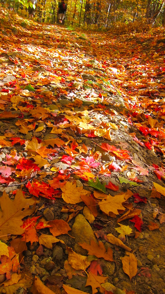 """""""We're walking on a carpet of color,"""" mused Jim Cluett, W1PID. (C) Copyright 2016 Tim Carter"""