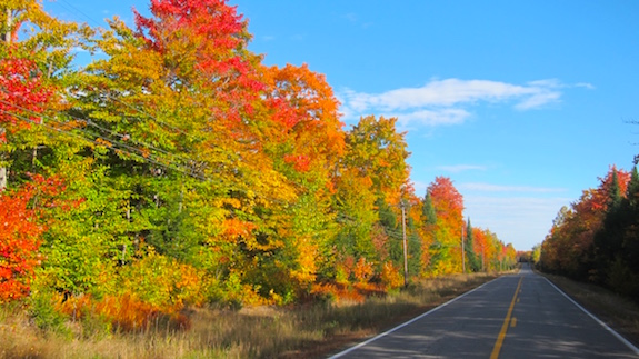 Driving north up Route 11 was like going through a gauntlet of mystical color. I've never seen such vibrant fall color in my life. (C) Copyright 2016 Tim Carter