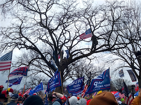 March for Trump Ellipse Men in Tree